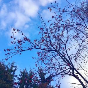 ほんのり、雪の日の… 朝さんぽっ♡