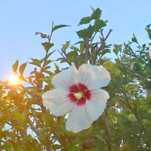 夏の終わりは、秋の始まり 。。( 私は、野田さんが良いなぁ〜〜 )