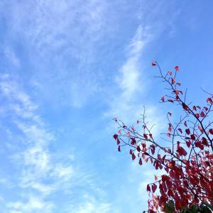 白いレースを編んで、秋の空に、そっと、浮かべてみたよ。