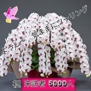 【感謝】ブログ来訪者 6000人突破