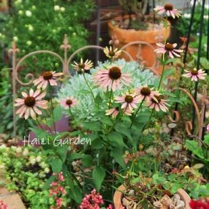 赤玉土の使い方&パンダスミレやゲラニウムの小花達