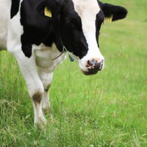 牛乳の賞味期限切れ1ヶ月はヤバい?処分方法は?