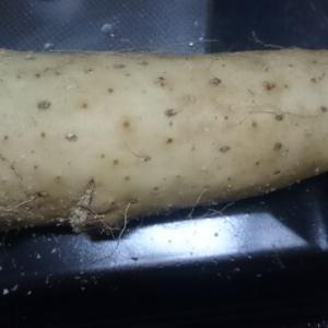 長芋と山芋の違いは見た目でわかる?とろろやお好み焼きに合うのはどっち?