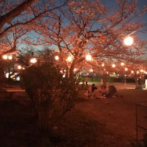 2020 下関 おすすめ桜スポット🌸