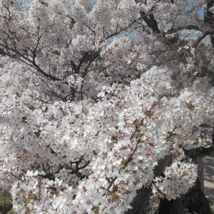 世間は大変な中でも花は咲く