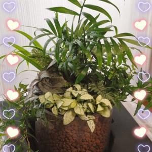 お部屋で♡小さなジャングルを楽しむ♪
