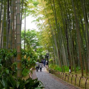 「竹林の小径」伊豆の小京都・修善寺にある癒やしの道