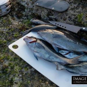 釣った魚(メジナ)をキャンプで調理