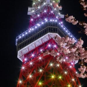 新緑色の東京タワーと八重桜のコラボ