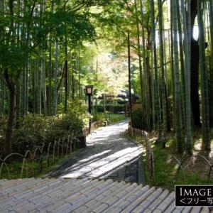 修善寺の情緒溢れる「竹林の小径」