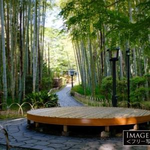「竹林の小径」ベンチで竹の葉の音を楽しむ