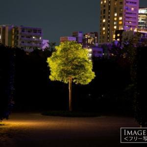 夜の公園でライトアップされた木