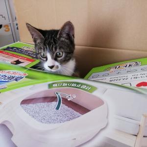 【猫と暮らしているんです】復活!!システムトイレの儀!!