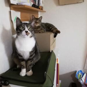 【猫と暮らしているんです】レイアウト変更と猫