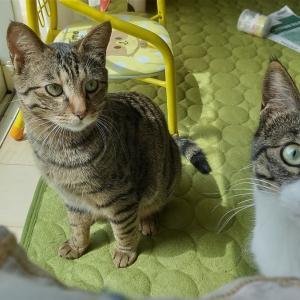 【猫と暮らしているんです】うちの周りに子猫がいっぱいいるかも知れない🐱