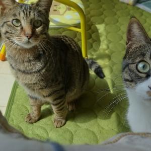 【猫と暮らしているんです】猫だけ先にさっぱり衣替え