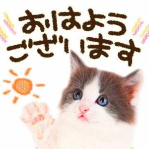 今日は、胸を張る((( *´꒳`* )))