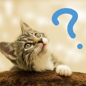 老けないブログ【172】脳の老廃物ってどのくらい出てるかご存知ですか?