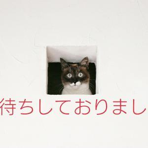 老けないブログ【183】いい夢みろよ(  ー̀֊ー́ )✧
