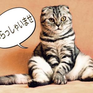 老けないブログ【299】へ?嘘( ºロº)?