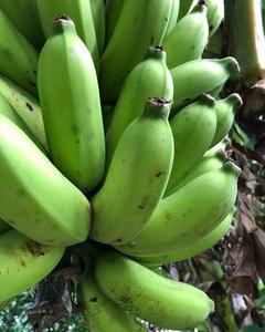 バナナ販売しま~す☆彡