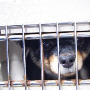 犬や猫を飼う前に考えてほしいこと。ボランティア活動で見た不幸な命を思い、伝えたいこと。