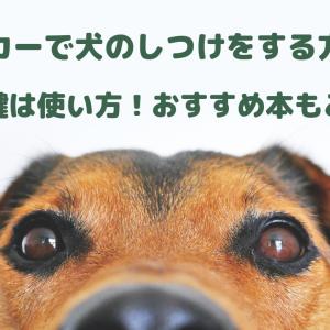 クリッカーで犬のしつけをする方法は?成功の鍵は使い方!おすすめ本もご紹介!