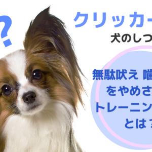 クリッカーでの犬のしつけ 無駄吠え 噛みつきをやめさせるトレーニング方法とは?