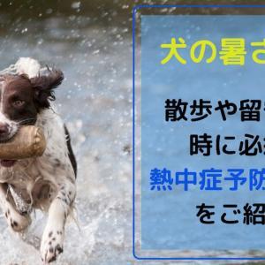 犬の暑さ対策 散歩や留守番の時に必須の熱中症予防グッズをご紹介!