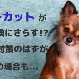 サマーカットが犬を危険にさらす!?熱中症対策のはずが逆効果の場合も