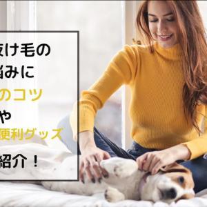 犬の抜け毛のお悩みに 掃除のコツやおすすめ便利グッズをご紹介!