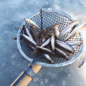 初の糠平湖 ワカサギ釣り時々、サクラマス狙い
