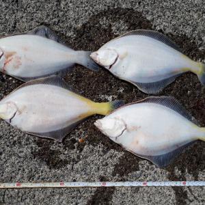 浜益でサクラマスを狙い、雄冬でカレイの投げ釣り。その後、苫小牧東港でサクラマス狙いへ