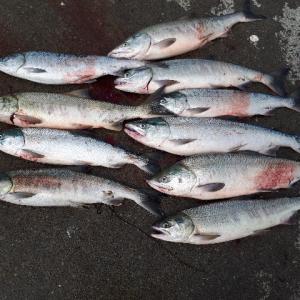 2020年 アキアジ釣り ★オホーツク海にて大爆釣★