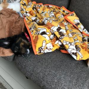 毛布を掛けて寝れるようになったらしい