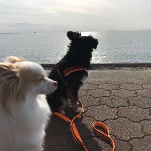 久しぶりに浜辺を散歩したら潮臭くなったミックス犬