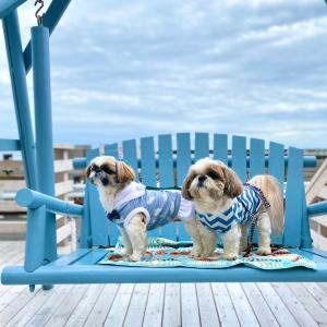 【茅ヶ崎】ニューオープン!パステルブルーのブランコが目印の海カフェ