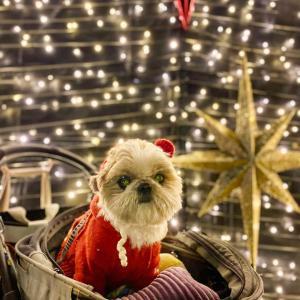 【要事前予約】横浜赤レンガ倉庫クリスマスマーケット2020