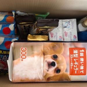 Amazonパントリー実質無料祭&くるくる動く犬