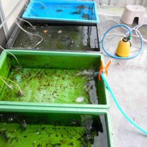 排水加工をしたトロ舟2