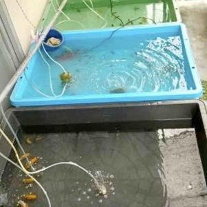 排水加工をしたトロ舟3