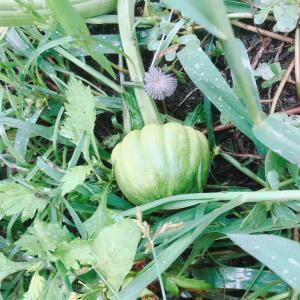 """畑からこんにちは! 9013   """"秋に向けての準備…   """"    秋に植える野菜・楽しい家庭菜園!"""