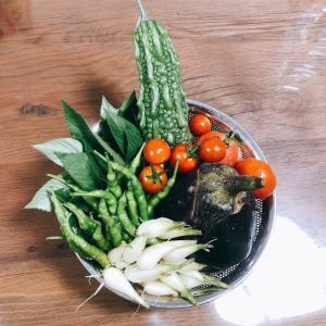 """畑からこんにちは! 0923   """" 総集編/第三弾!・収穫まとめ  """"    沢山収穫できる夏野菜・楽しい家庭菜園!"""