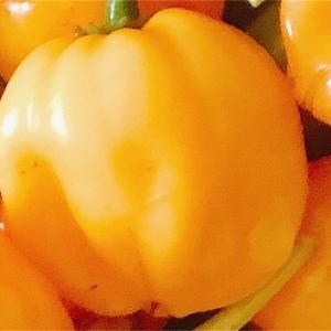 """畑からこんにちは!😃 210824    """"オレンジの悪魔…😱"""""""