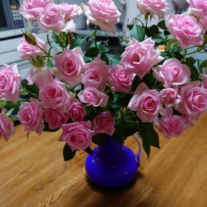 五月のバラ