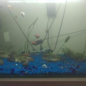 金魚の水槽の白濁りや汚れる原因とは?