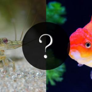 金魚と一緒に飼える熱帯魚はいる?おすすめの魚たち