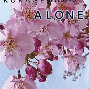 川津桜が7分咲きです