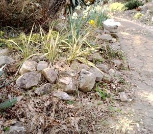 水仙と石でハチャメチャに