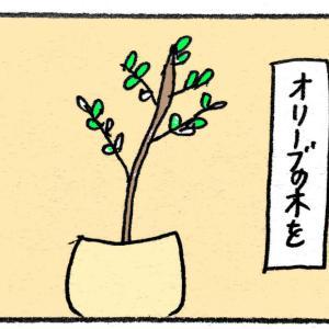 【朝の部】オリーブの木が欲しい
